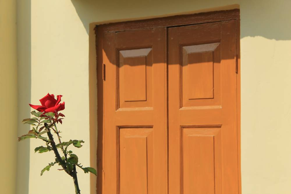 цветок розы у двери