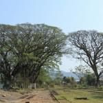 Крона дерева над железной дорогой