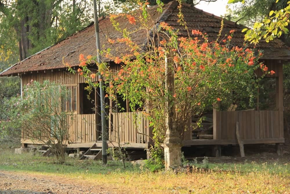 красивый куст перед деревянным домом