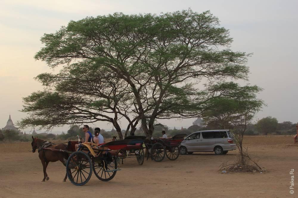 Повозка с лошадью под деревом