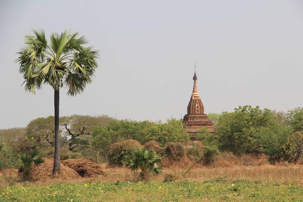 пальма и пагода в мьянме