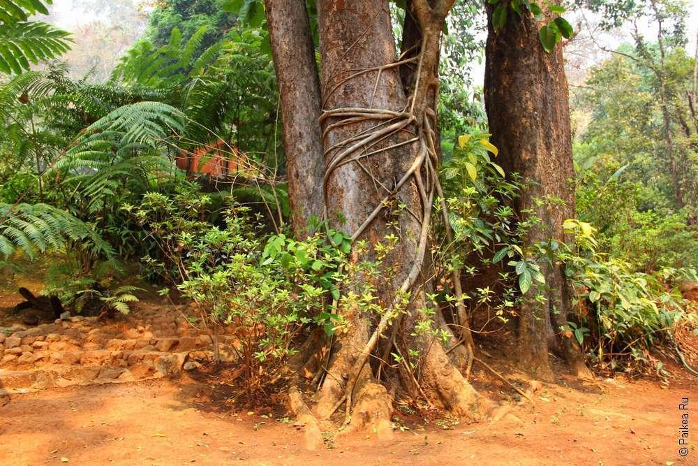 Национальный парк Намток Па Суа, Северный Таиланд