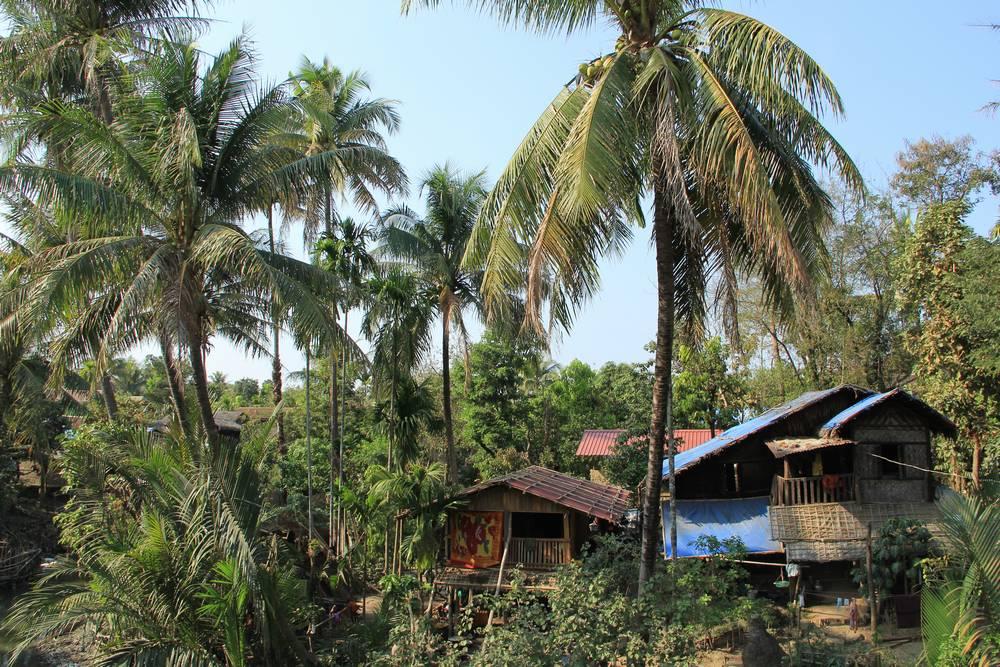 Дом под пальмой