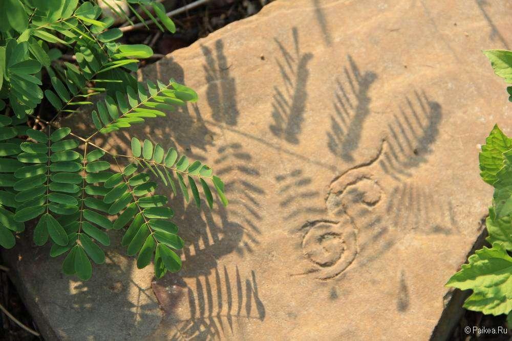 Тень растения на камне с узором