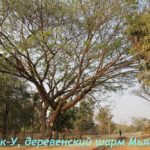 Мраук-У, Мьянма Бирма (Mrauk-U, Myanmar Burma)