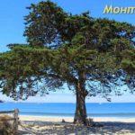 Дерево на берегу океана