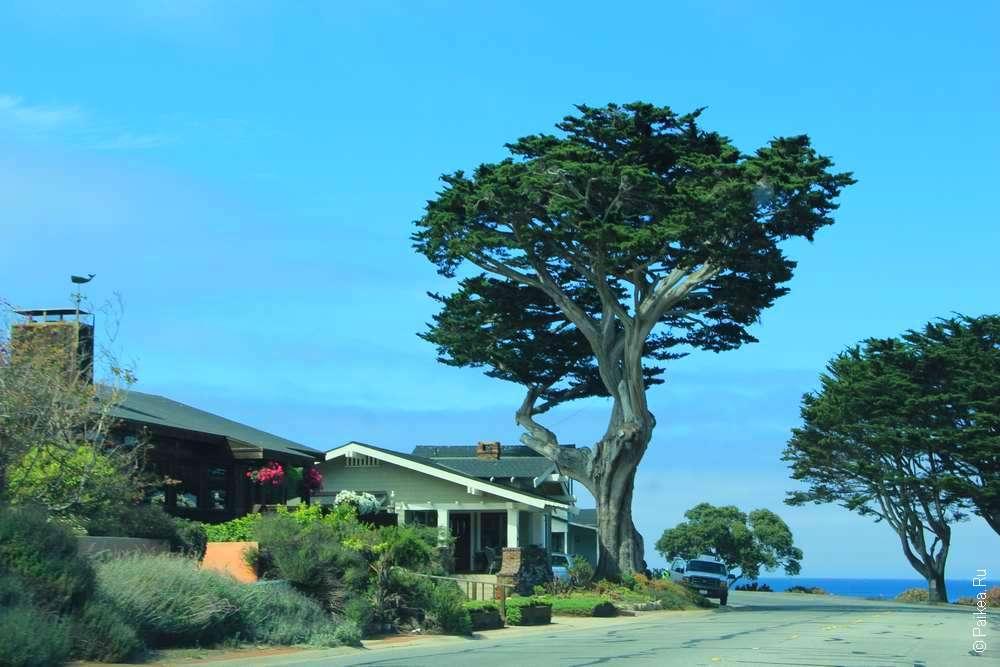 Низкий дом и дерево