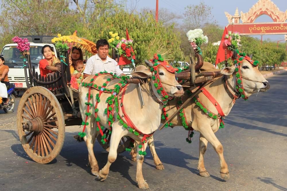 Праздничная колесница на дороге в Багане