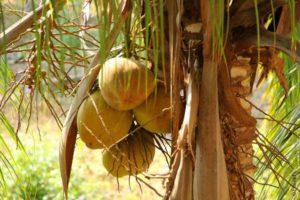 Маршрут по Камбодже, план путешествия