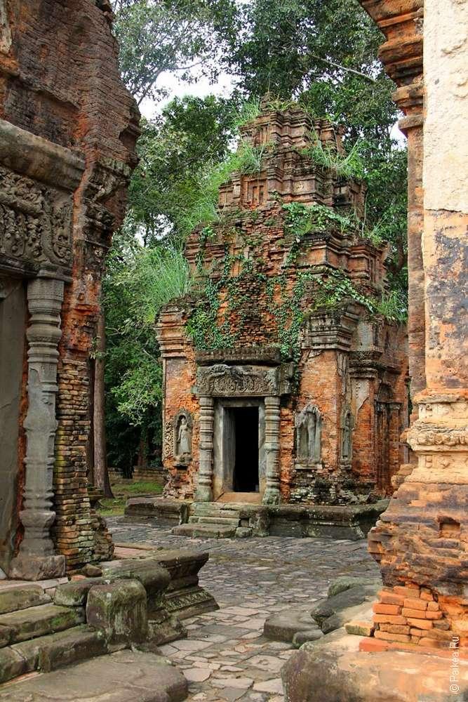 Крыша кхмерского прасата проросла зеленью