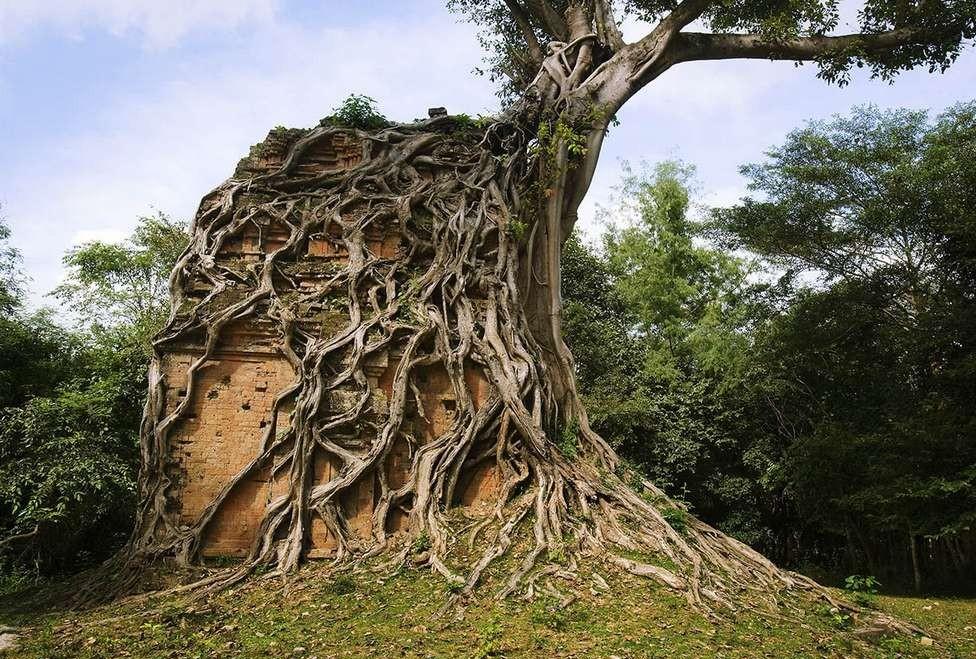 Дерево обросло храм