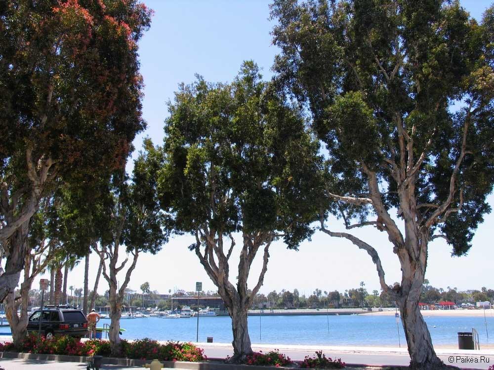 Марина Бич в Лос-Анджелесе