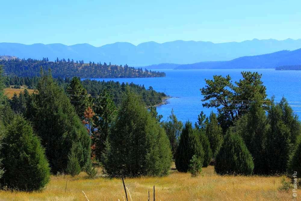Лес на берегу озера в штате Монтана