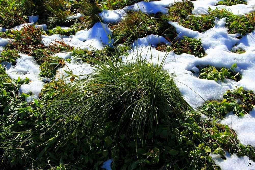 Трава под снегом