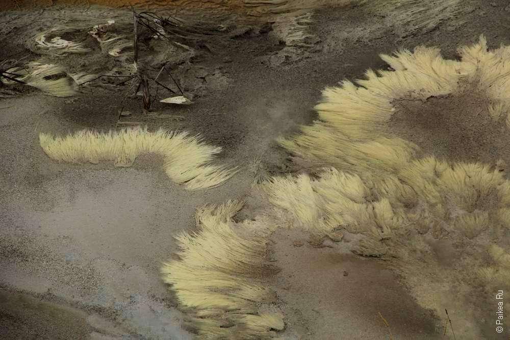 Водоросли в геотермальных источниках