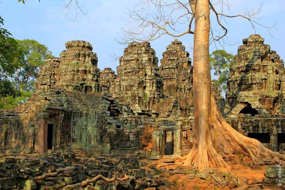 Руины храма и дерево