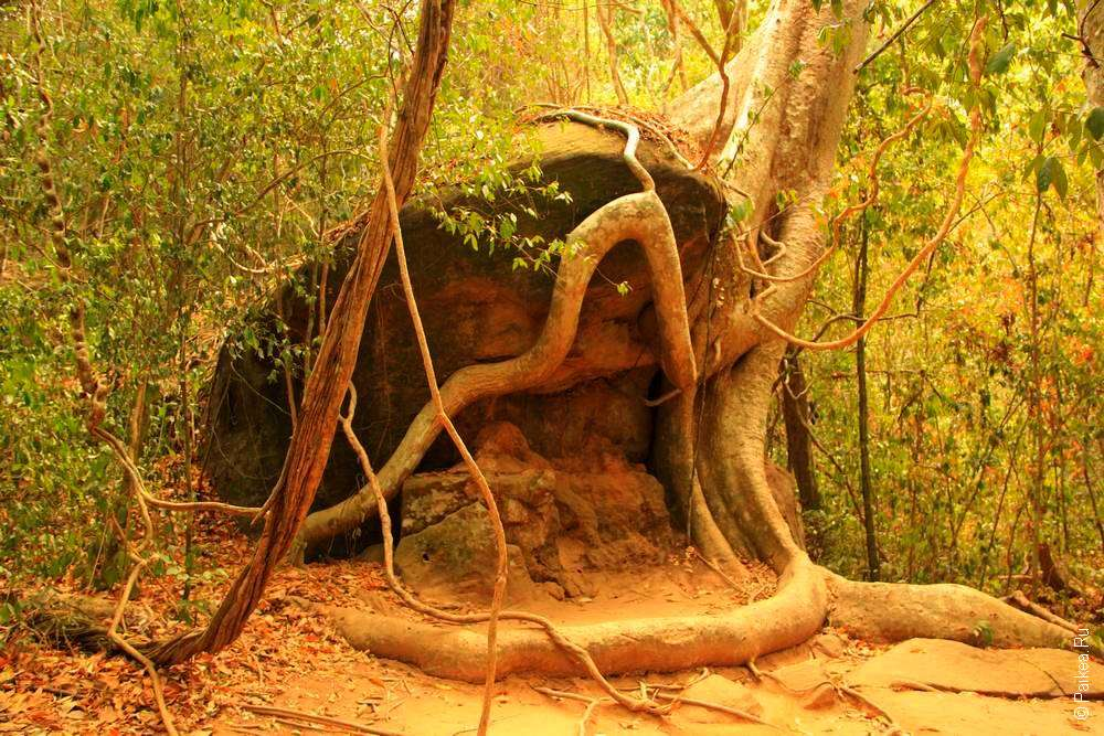 Дерево и камень по пути к Кбаль Спеан