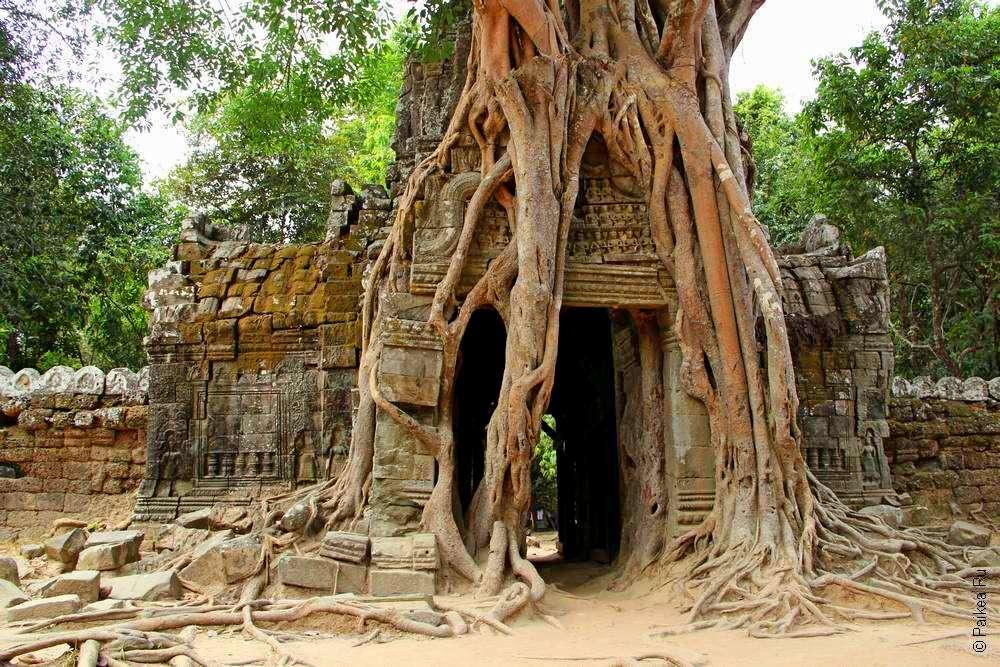 дерево и храм