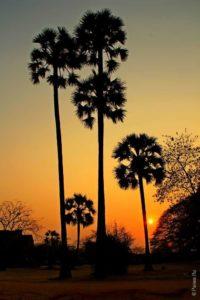 Пальмы на закате в храме Ангкор Ват Камбоджа