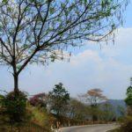 Дорога в Северном Таиланде