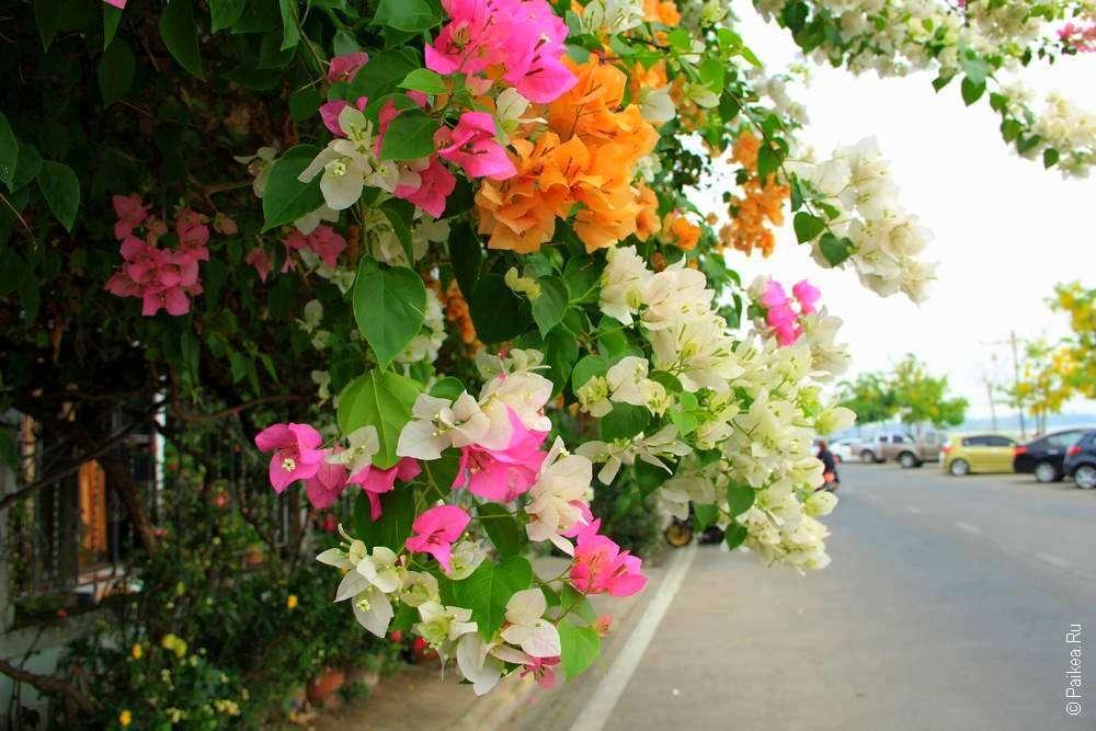 Яркие цветы на улице