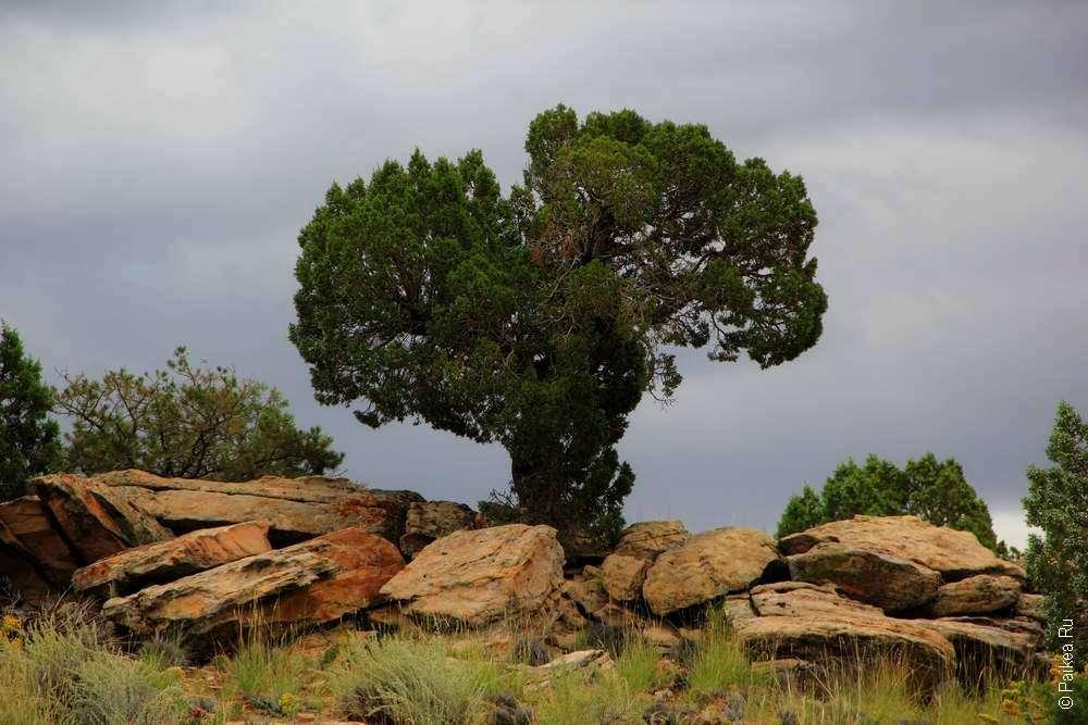 Дерево в парке Колорадо