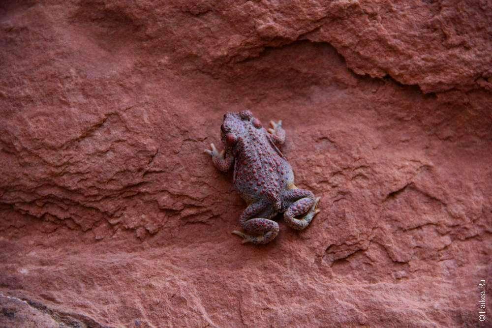 Лягушка на каменной стене