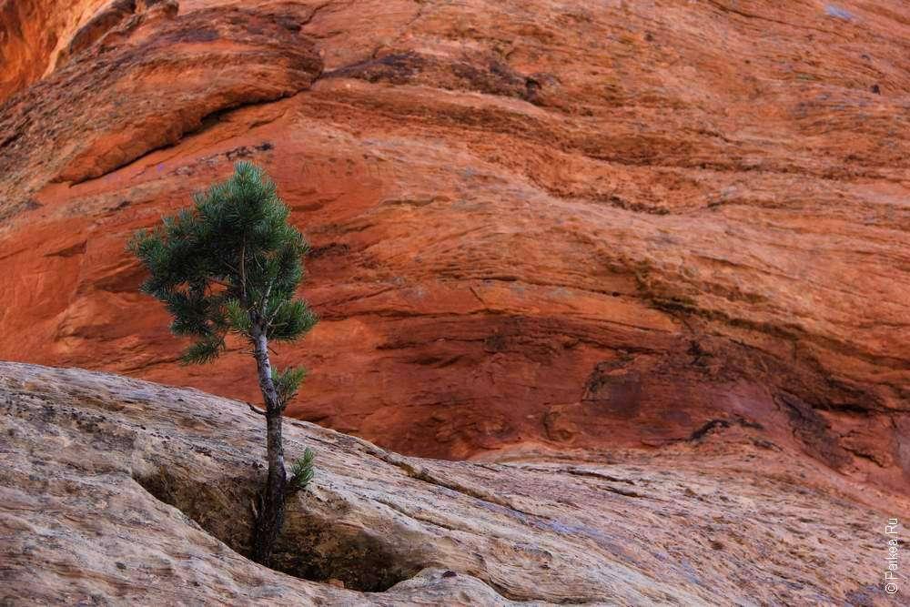 Дерево растет в скале