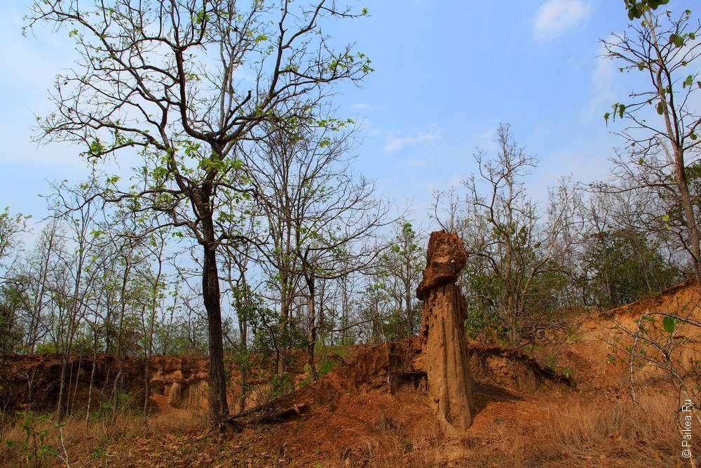 Худус в Северном Таиланде