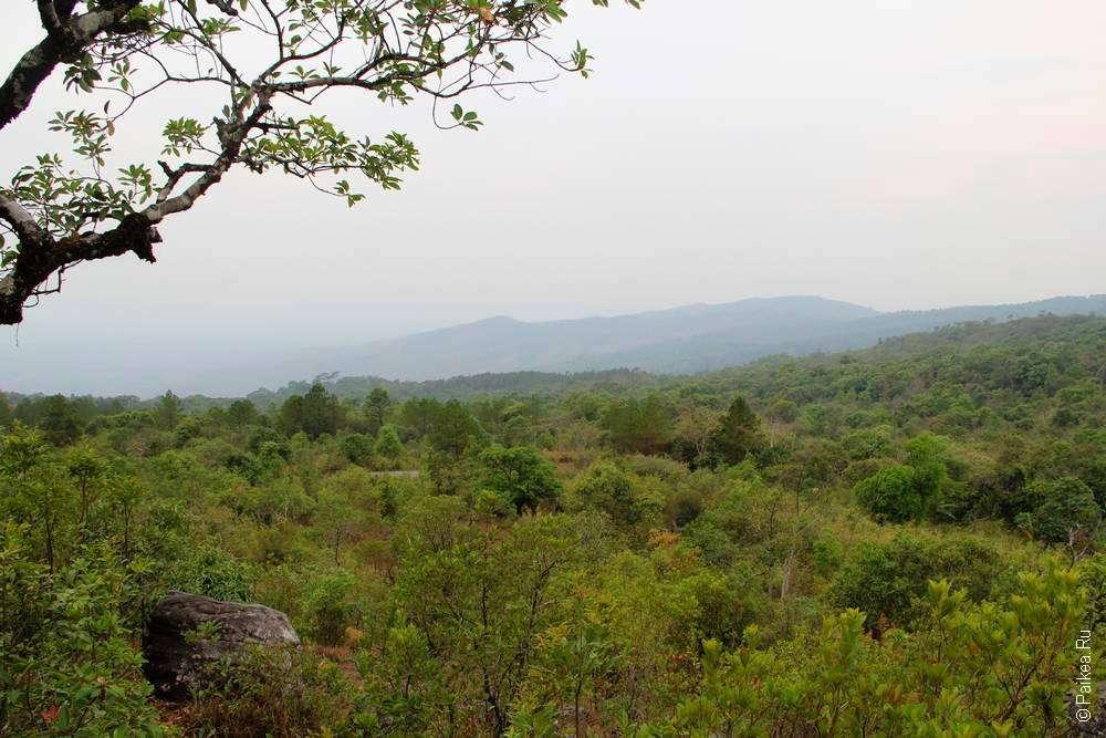 Зеленый покров горы