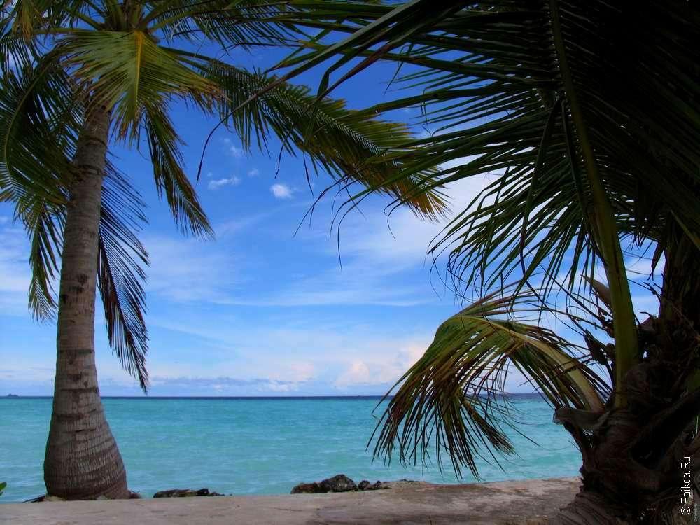 Недорого на Мальдивы - Тодду
