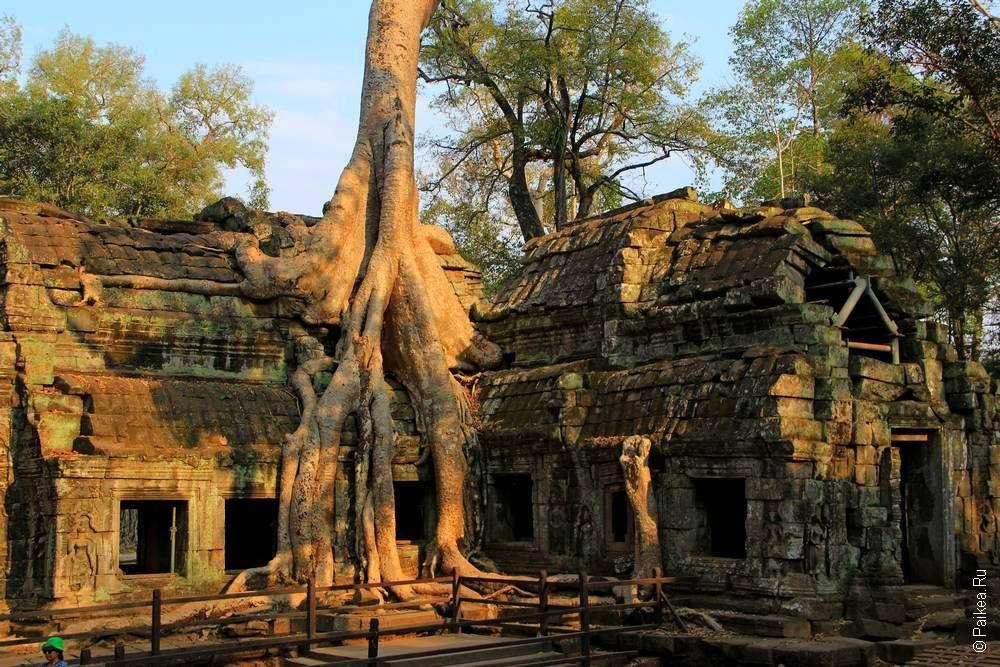 Храм Та Пром Камбоджа