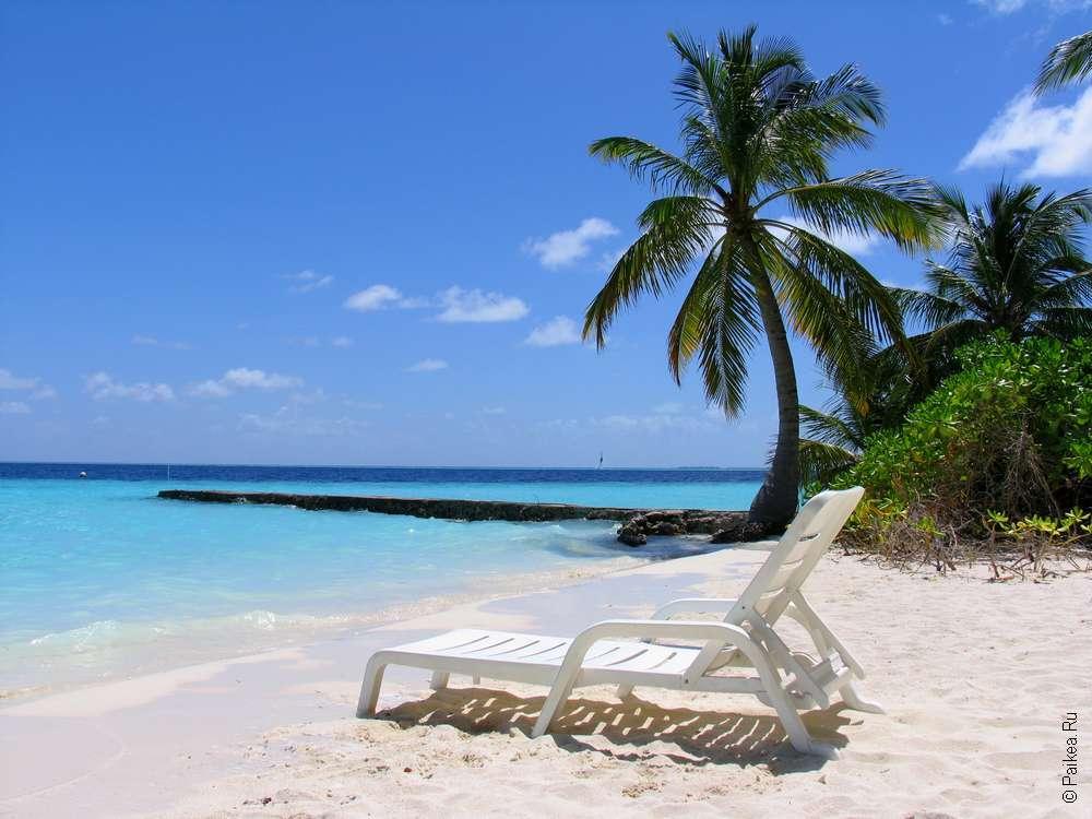 Шезлонг и пальма на пляже