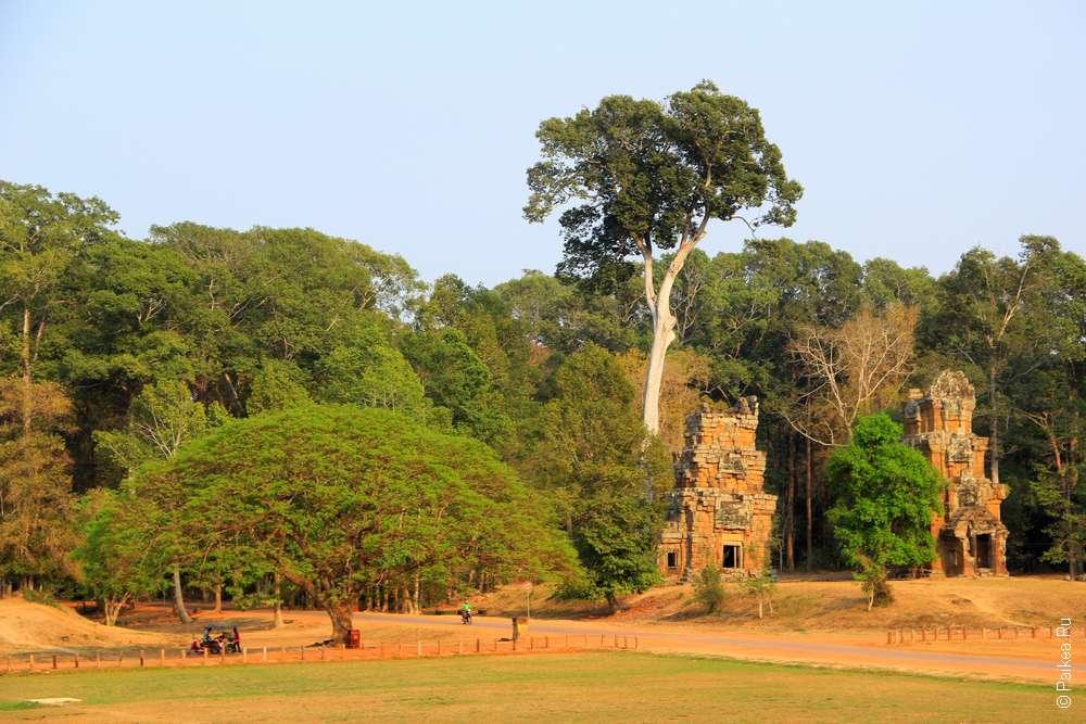 Раскидистое дерево на терриории Ангкор Тхома