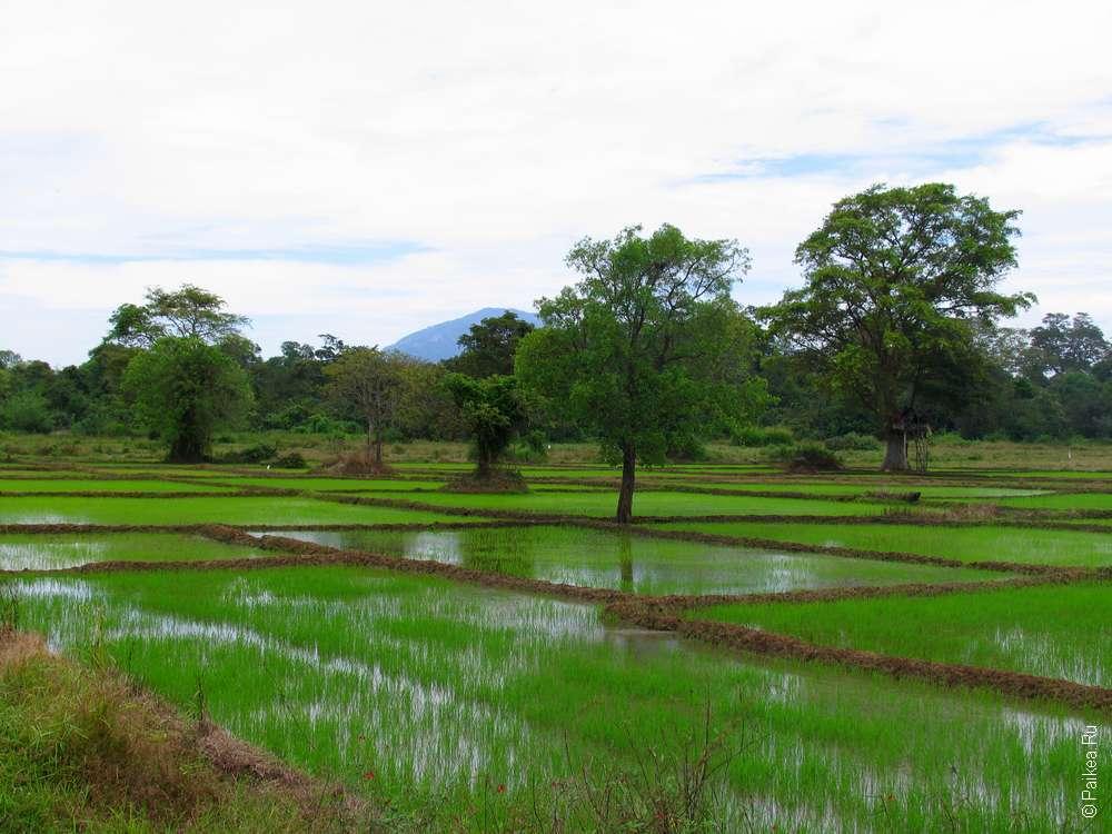Особенности путешествия по Шри-Ланке