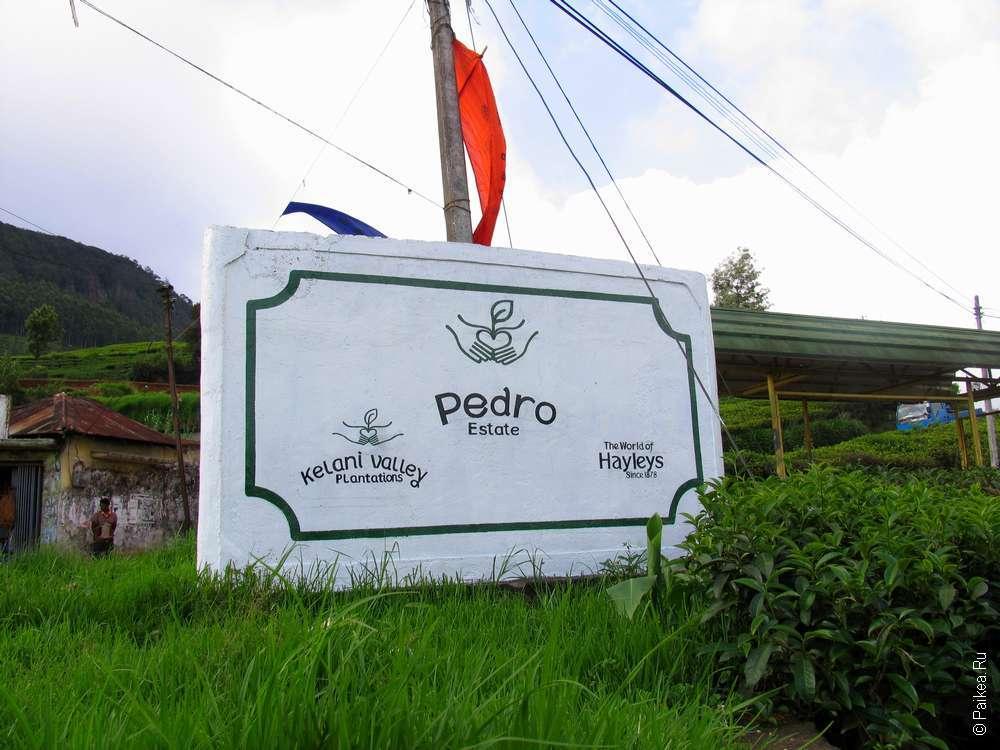 Шри-Ланка чайная фабрика