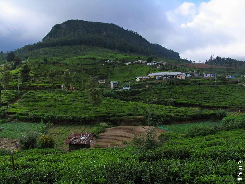 Чайная фабрика Педро