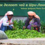 Как делают чай в Шри-Ланке