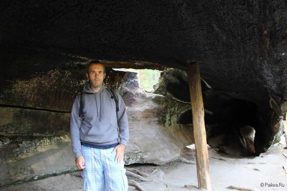 Кингс каньон внутри дерева