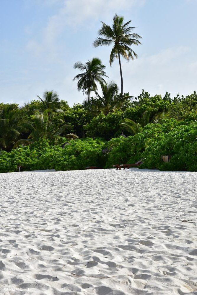Пляжи Мальдив песок и пальма