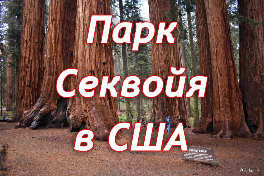 парк секвойя сша