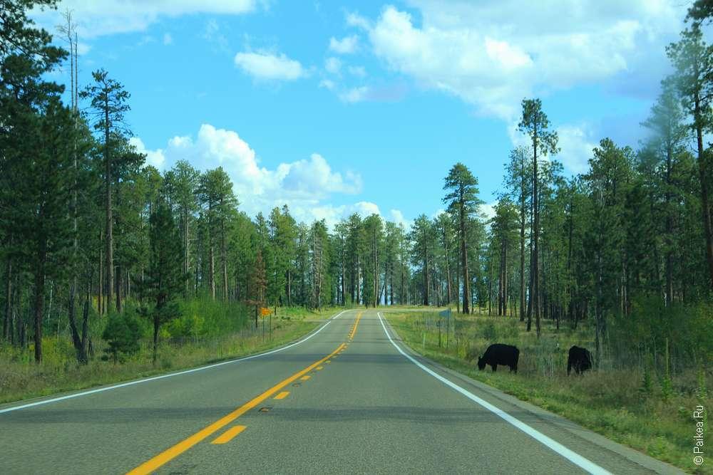 Дорога в Гранд-Каньон