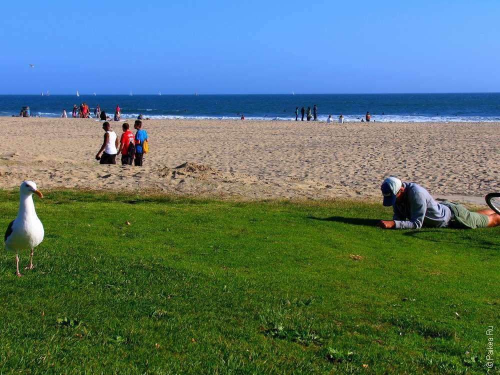 Пляж Венис, Лос-Анджелес, Калифорния, США