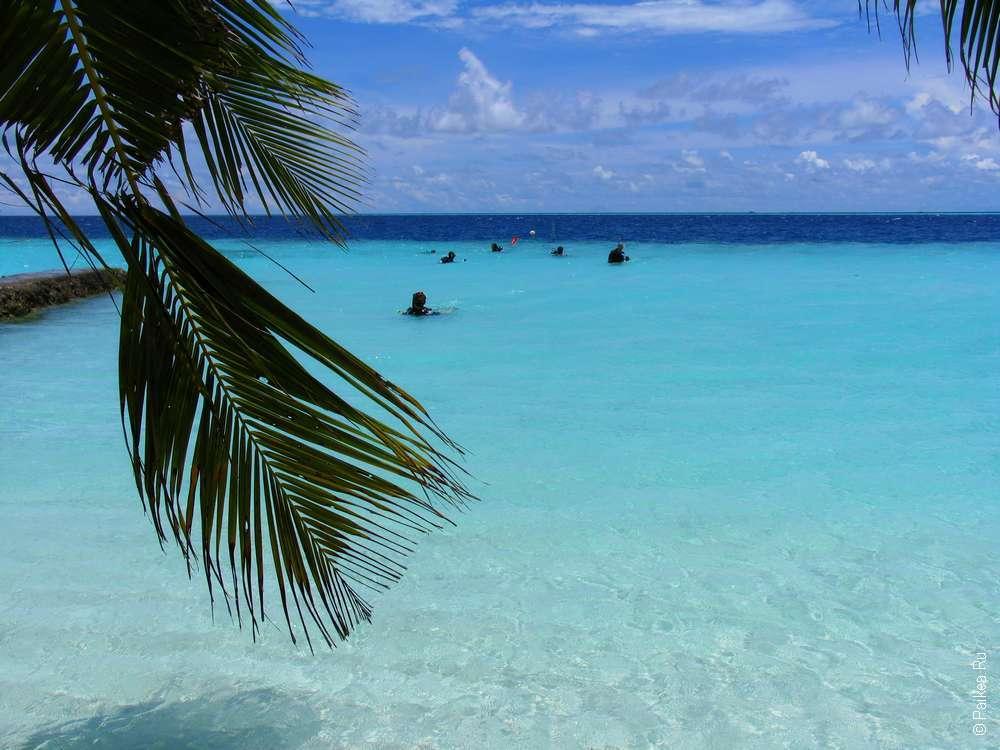Мальдивы дайвинг