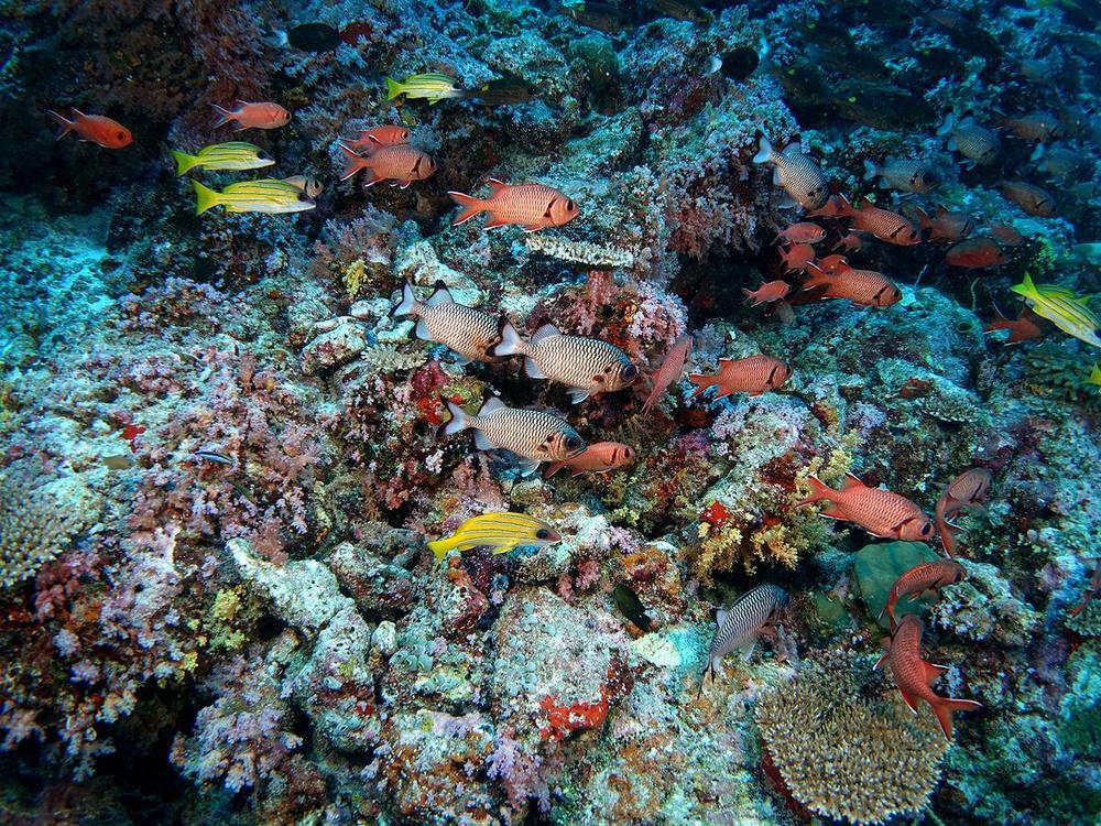 Мальдивы рифы