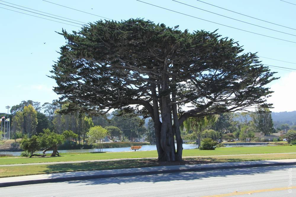 монтерей калифорния фото
