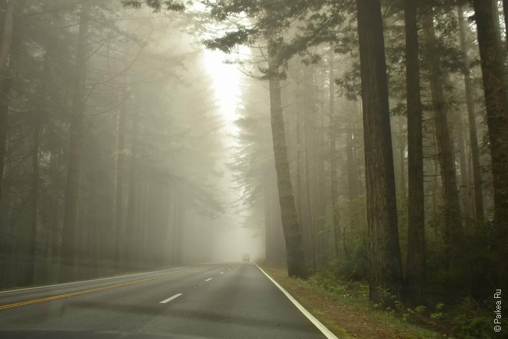 redwood highway ca