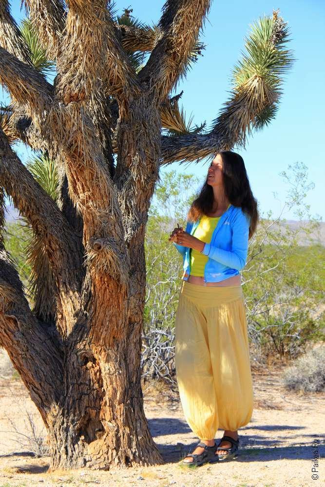 Пустыня Мохаве - дерево джошуа три