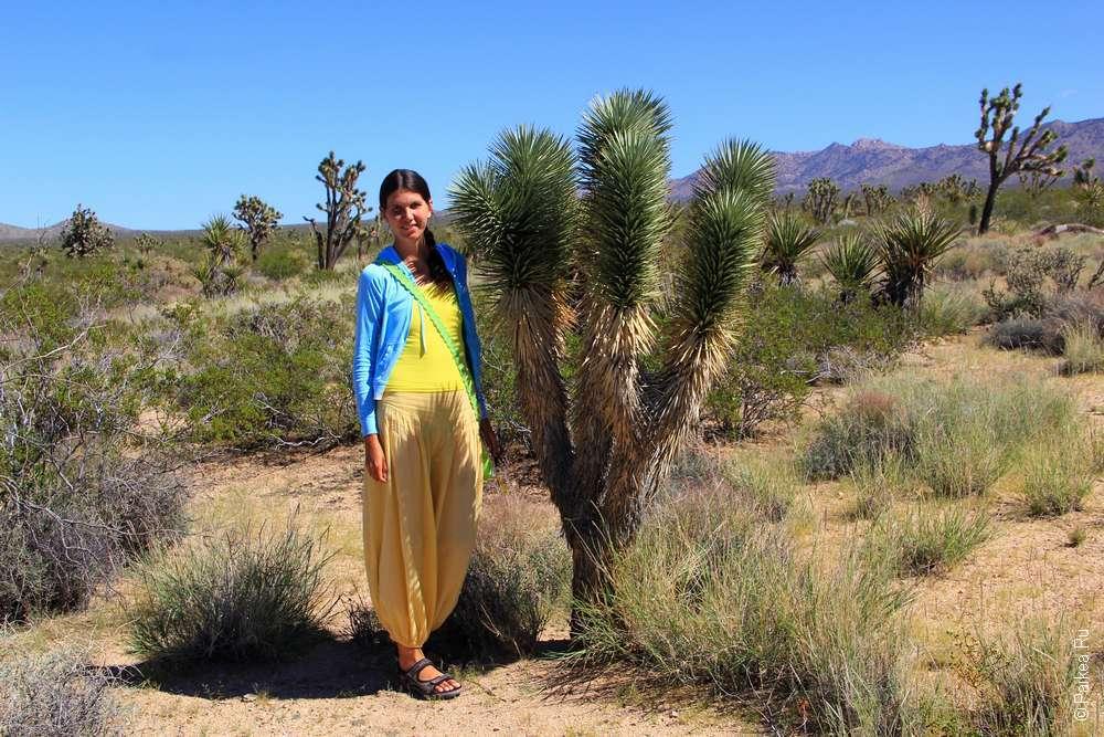 Деревья джошуа в пустыне Мохаве США