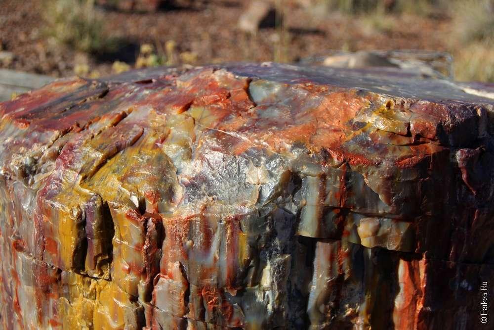 Окаменевший лес (Петрифайд Форест), Аризона, США - Радужный пень